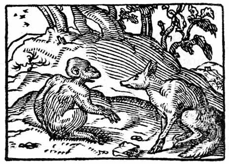 monkey-and-fox