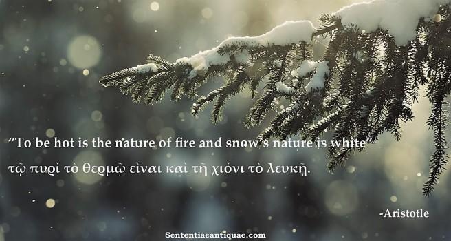 Snow istotle